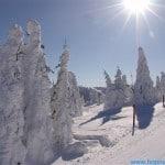 JANUAR 1  2012 273