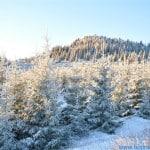 zima (1)