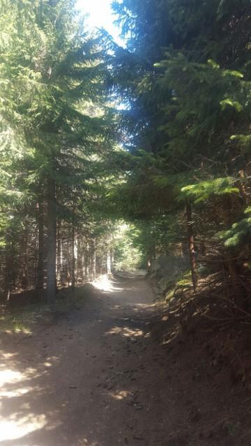 Trim staze ovog leta na Kopaoniku: Turisti koji odluče da provedu odmor na Kopaoniku ovog leta očekuju trim staze. Svi oni koji žele da provedu aktivan