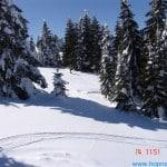 zima (242)
