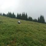 Dani borovnice na Kopaoniku HopNaKop (12)