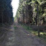 uzgajalista divlje svinje i evropskog jelena HopNaKop Kopaonik (1)