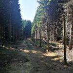 uzgajalista divlje svinje i evropskog jelena HopNaKop Kopaonik (2)