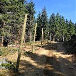 uzgajalista divlje svinje i evropskog jelena HopNaKop Kopaonik (3)
